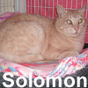 Solomon was adopted from the Cat House and Adoption Center on Sunday, June 22, 2008.