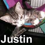 Justin was adopted from the Cat House and Adoption Center on Saturday, June 21, 2008.