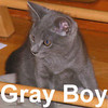 Gray Boy was adopted from the Cat House and Adoption Center on Wednesday, July 9, 2008.