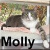 Molly was adopted from the Cat House and Adoption Center on Saturday July 19, 2008. Will Protect You and Your Family... from renegade bugs that get in the house.  Molly Junior is a sporting feline that welcomes the challenge of surveilling the inside of the house and keeping intruders out. She's a quirky kitty that loves people.