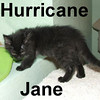 Hurricane Jane was adopted from the Cat House and Adoption Center on Saturday, July 19, 2008.
