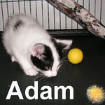 Adam was adopted from the Cat House and Adoption Center on Saturday, June 21, 2008.