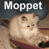 Moppet and Magnus (sister and brother) were adopted from the Cat House and Adoption Center on Sunday, June 15, 2008.