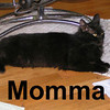 Momma was adopted from the Cat House and Adoption Center on Wednesday, July 9, 2008.