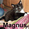 Magnus and Moppet (brother & sister) were adopted from the Cat House and Adoption Center on Sunday, June 15, 2008.
