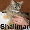 Shalimar was adopted from the Cat House and Adoption Center on Sunday, June 22, 2008.