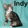 Indy and Squeaky were adopted from the Cat House and Adoption Center on Sunday, July 5, 2008.