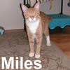 Miles (aka Milo) was adopted from the Cat House and Adoption Center on Saturday July 19, 2008.