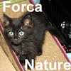 Forca Nature was adopted from the Cat House and Adoption Center on Friday July 25, 2008.