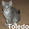 Toledo and Niko (brother & sister) were adopted from the Cat House and Adoption Center on Saturday, July 19, 2008.