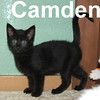 Camden and Wrigley (sister and brother) were adopted from the Cat House and Adoption Center on Saturday July 19, 2008.