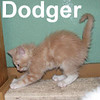 Dodger was adopted from the Cat House and Adoption Center on Saturday, July 12, 2008.