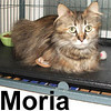 Moria was adopted from the Cat House and Adoption Center on Saturday, July 19, 2008. Moria seems confused with the new experience of comfort, regular meals, and loving attention. She'll do best in a quiet home environment with stability.