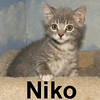 Niko and Toledo (sister & brother) were adopted from the Cat House and Adoption Center on Saturday, July 19, 2008.