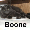 Boone was adopted from the Cat House and Adoption Center on Saturday, July 19, 2008. Boone is from a split family.  He's used to other pets but he'd love to have a person all to himself.