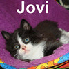 Jovi was adopted from the Cat House and Adoption Center on Saturday, July 19, 2008.