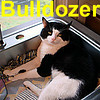 Bulldozer was adopted from the Cat House and Adoption Center on Monday, July 21, 2008.  As a friendly gesture, Bulldozer will greet you with his signature style head-butt. He's a long, lean boy that's been on the streets long enough to really appreciate the comforts of human care.