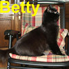 Black Betty was adopted from the Cat House and Adoption Center on Sunday, October 12, 2008.  Don't I have a great profile? You should see my other side. Ramblin' Black Betty is hungry for affection.  If she doesn't get your attention with an out-reached paw, she'll try to open her cage door herself just to get to you.