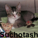 Suchotash, Baker, and Shiba were adopted from the Cat House and Adoption Center on Saturday, October 4, 2008.