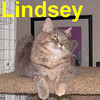 Lindsey was adopted from the Cat House and Adoption Center on Saturday, November 1, 2008.  She'll be living with her former feline friend, Viola.