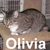 Olivia was adopted from the Cat House and Adoption Center on Sunday, October 26, 2008.