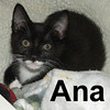 Anastasia and Willis were adopted from the Cat House and Adoption Center on September 28, 2008 and picked up on Saturday, October 4, 2008.