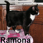 Ramona was adopted from our Cat House and Adoption Center on Saturday, October 11, 2008. Ramona is a shameless flirt that doesn't want to share you with any other pets. Her front toes were amputated so Ramona needs the safety of an indoor-only home.