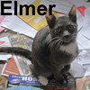 Elmer was adopted from the Cat House and Adoption Center on Saturday, November 1, 2008.