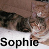 Sophie was adopted from the Cat House and Adoption Center on Sunday, November 2, 2008.