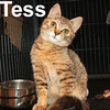 Tess was adopted from the Cat House and Adoption Center on Sunday, November 2, 2008.