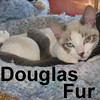 Douglas Fur was adopted from his foster home on Sunday, October 5, 2008.