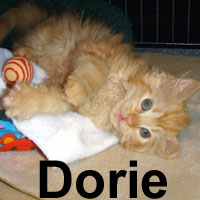 Dorie was adopted from the Cat House and Adoption Center (and now resides in OR) Tuesday, September 30, 2008.