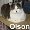 Olson was adopted from the Cat House and Adoption Center on Saturday, October 18, 2008. Olson is a cat with some guard dog in his blood. He'll spend his days prowling bookshelfs, spying on neighbors, and investigating all movement in your house.