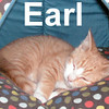 Earl was adopted from the Cat House and Adopton Center on Saturday, November 1, 2008.