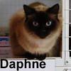 Daphne and Olive (sisters) were adopted from our Cat House and Adoption Center on Friday, October 17, 2008.