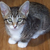 Ella was adopted from Healthy Pets Animal Hospital during October 2008.