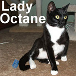 Lady Octane was adopted from the Cat House and Adoption Center on Tuesday, October 7, 2008 and will be residing in Spokane. Abandoned and left to fend for herself and her kittens, Lady Octane was poisoned in a cruel attempt to get rid of her. She's recovered beautifully and is ready for a home that will keep her forever.