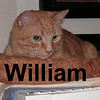 Sweet William was adopted from the Cat House and Adoption Center on Sunday, October 26, 2008.