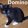 Domino and Oreo were adopted by their foster mom on Monday, October 6, 2008.