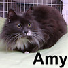 Amy was adopted from our Cat House and Adoption Center on Saturday, October 11, 2008.  Amy is an older girl with the heart of a kitten.  She'll do well in a quieter home with a consistent routine.  Amy would love to spend time in your lap letting you groom and adore her.  She definitely has Persian in her heritage.
