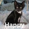 Happy was adopted from the Cat House and Adoption Center on Saturday, November 1, 2008.