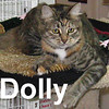 Dolly was adopted from our Cat House and Adoption Center on Saturday, October 11, 2008.  Dolly wears her coat of many colors her momma made for her. She's cute and adorable, yet a little camera shy; reserving her personality for when she meets you in person.