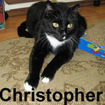 Christopher Cross, Jenni Lou, and Bug were adopted from our Cat House and Adoption Center on Saturday, October 4, 2008.  Christopher Cross is friendly, talkative, and likes small dogs. Give him an observation post where he can keep an eye on you, and some small canine companions, and Chris will be in cat heaven.