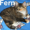 Fern was adopted from the Cat Show on Sunday, November 2, 2008.