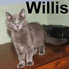 Willis and Anastasia were adopted from the Cat House and Adoption Center on September 28, 2008 and picked up on Saturday, October 4, 2008.  Half kitten, half love machine, and 100% adorable.