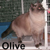 Olive and Daphne (sisters) were adopted from our Cat House and Adoption Center on Friday, October 17, 2008.