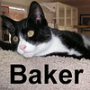 Baker, Shiba and Suchotash were adopted from the Cat House and Adoption Center on Saturday, October 4, 2008.