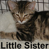 Little Sister and Stripey Stripe (siblings) were adopted from the Cat House and Adoption Center on Saturday, January 17, 2009.