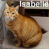 Isabelle was adopted from the Cat House and Adoption Center on Sunday, January 18, 2009.
