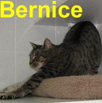 Bernice was adopted from the Cat House and Adoption Center on Sunday, January 4, 2009.